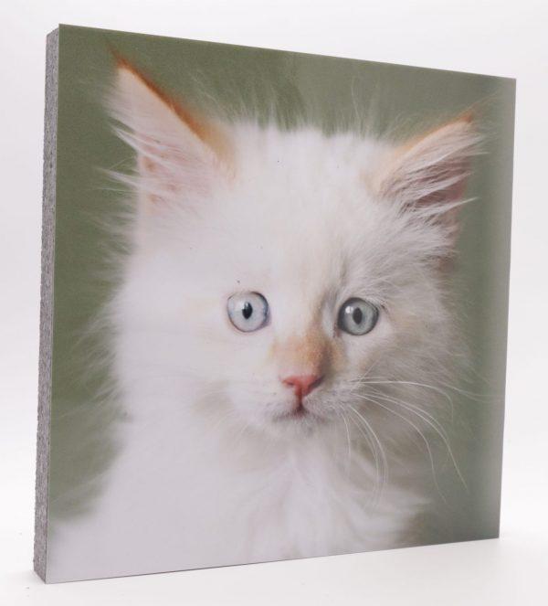 Wandbild weißes Katzenbaby